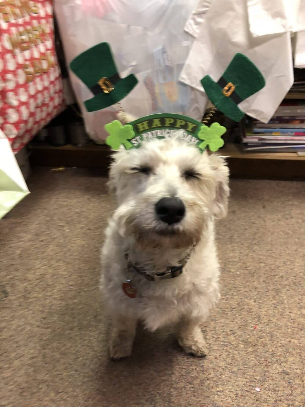 St Paddy's Barnaby Dog